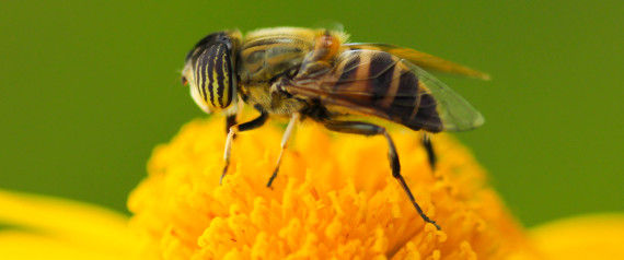 As Honeybees Continue To Struggle, USDA Spending $3M To Kickstart Recovery